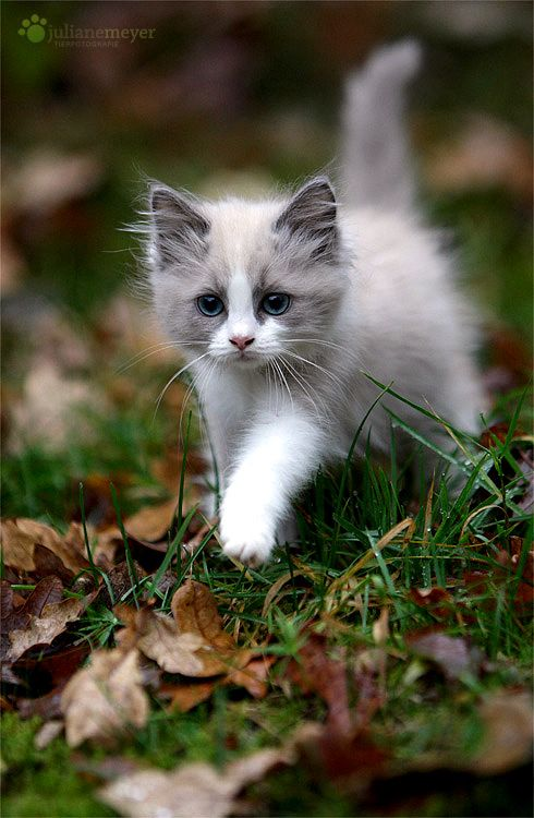 Beautiful little kitten