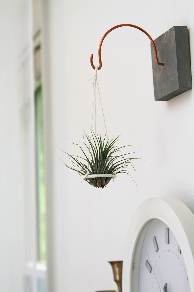 25 best ideas about hanging air plants on pinterest for Air plant holder ideas