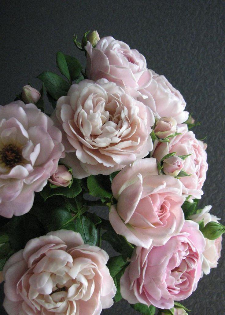 супер картины розы из полимерной глины фото возвращает память