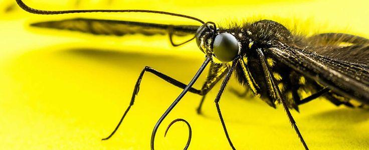 Misterioso insecto con tentáculos peludos causa temor en redes sociales - VIva Nicaragua Canal 13