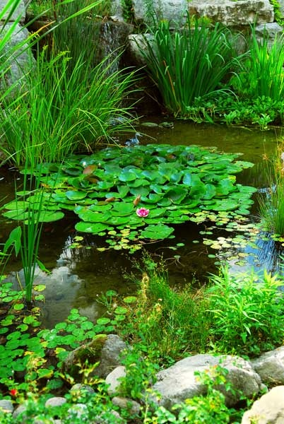 Pond with lily pads ~ IronwoodLandcrafters.com