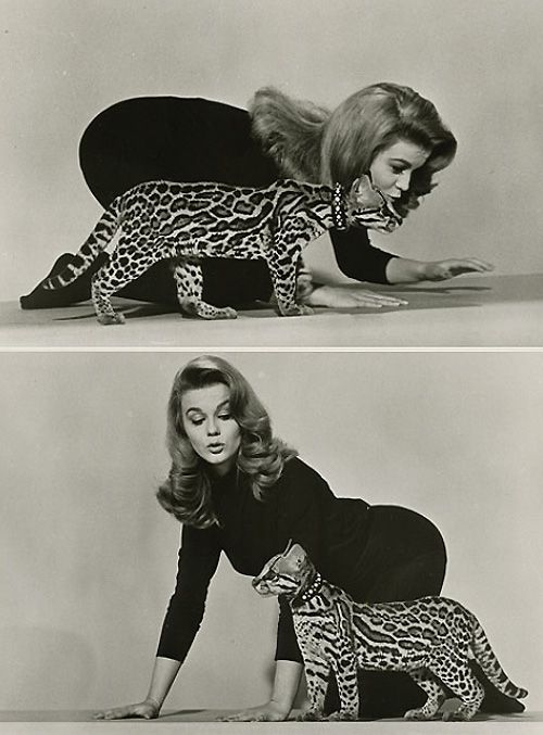 Look at these two terrific kittens! (Ann-Margret and her beautiful ocelot.)