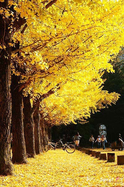 One of my wish lists. Autumn in Korea.