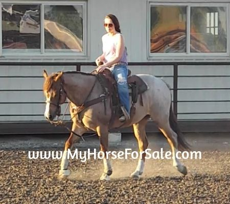 Aprils Royal Chic, American Quarter Horse for Sale on www.MyHorseForSale.com  Louie is a very nice gentle gelding with lots of talent and unique looks. He has had some professional team roping training (heading & heeling) but is not a finished rope horse. He is a pleasure to be around and has never taken a lame step. Louie has a nice lope, fast and very slow and takes his leads. He definitely catches your eye when he rides by.