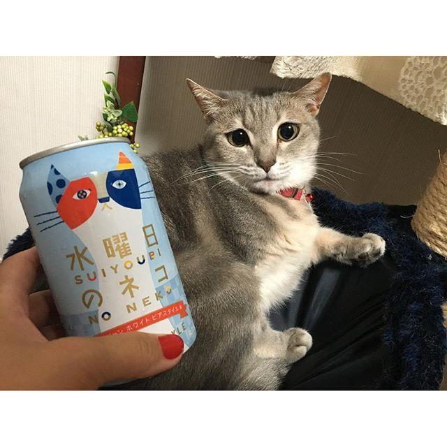 🐈 1人快気祝い꒰*´∀`*꒱❤️固形物うまーい✨ * ビールうまーい✨꒰*´∀`*꒱❤️いまちょっとお腹痛いのは気のせい← * #cat#ねこ#猫#ペット#かわいい#愛猫