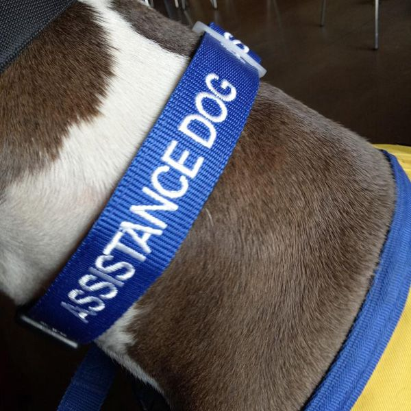 Let Others Know That Your Assistance Dog Is On The Job And Should
