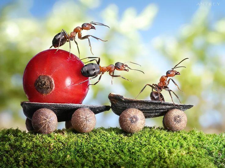 Antrey Pavlov: Photos, Andreypavlov, Macro, Art, Andrey Pavlov, Photographer, Ants, Photography, Ant Tale
