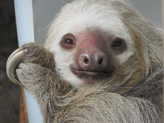http://www.wfaa.com/mobile/article/life/heartwarming/adopt-a-sloth-for-valentines-day/510535990