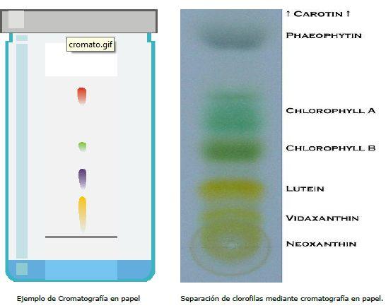 Cromatografía en papel para separar mezclas homogéneas.
