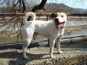 JRT / Rocco - I have three years