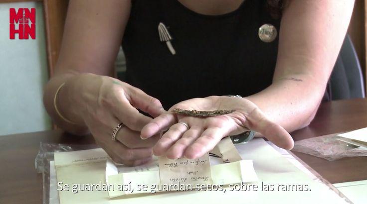 """Presentación de la nueva expo que se viene: """"Hongos: un reino por descubrir"""" con Fundación Fungi, Hongos de Chile."""