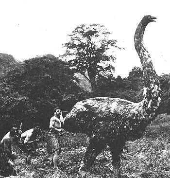 The giant moa, a flightless bird that stood up to ten feet tall, was hunted to extinction (second half of the 14th century AD) endemic to New Zealand, over-hunted by Maori they became extinct