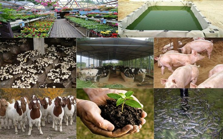 Agricultural Business Ideas With Very Low Investment