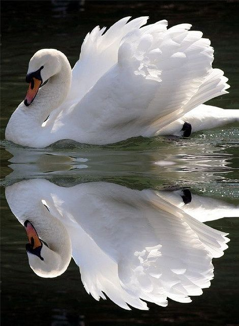 : Swan Mirror. Maybe have a baby's head peeking out from the front