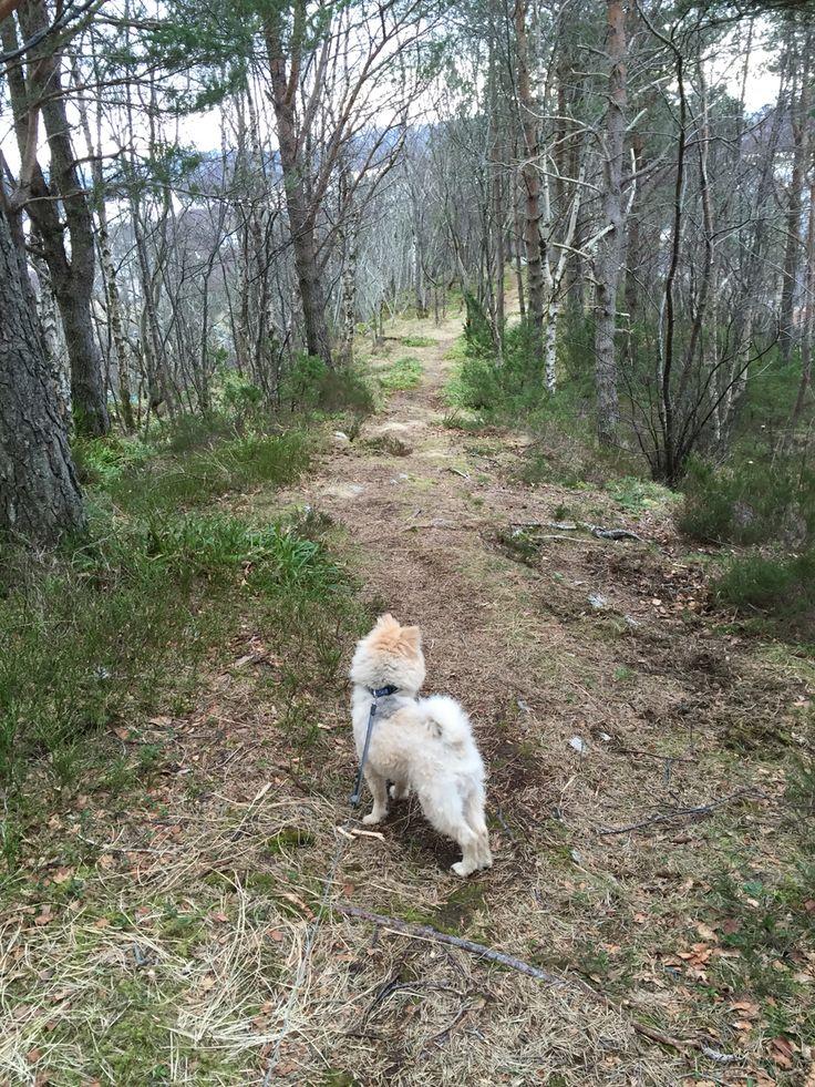 Pomeranien, woods