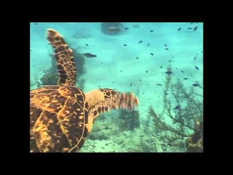 """Out on the Coral Reef"" --song while showing real footage of coral reef (but be careful not to show ad that comes before the video--wasn't appropriate for little ones)"
