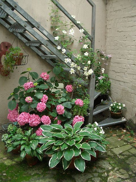 Pretty combination. One pinner wrote... I'm liking the idea of planting hosta in a container, annuals for color