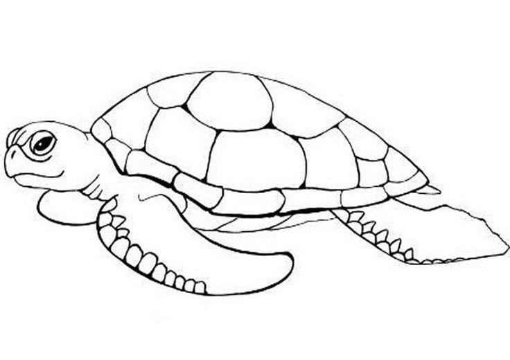 Schildkroten Ausmalbilder schildkröte malvorlagen  ...