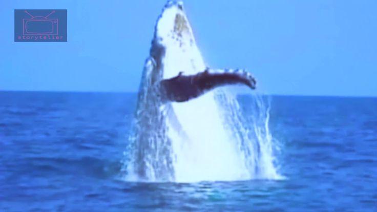 Whale Watching | Storyteller Media