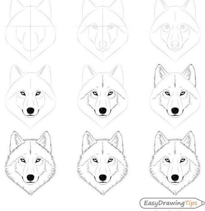 How To Draw A Wolf Face Head Step By Step Easydrawingtips In 2020 Easy Drawings Wolf Face Drawings With Meaning