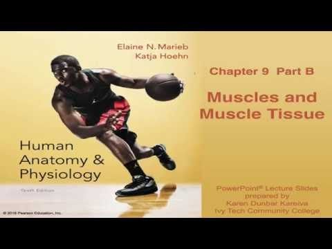 The 55 best BIO.1141 Anatomy and Physiology images on Pinterest ...