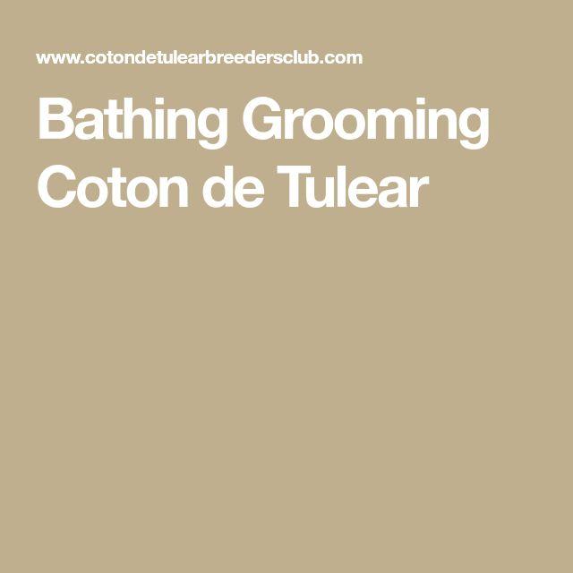 Bathing Grooming Coton de Tulear