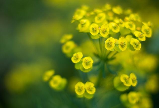 Tiny Flowers by thelittlebean_78, via Flickr: Tiny Flowers, Photo