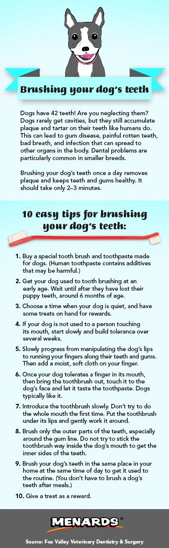 Manage your pet's dental care with these easy tips for brushing your dog's teeth! http://www.menards.com/main/c-19338.htm?utm_source=pinterest&utm_medium=social&utm_campaign=pinsforpets&utm_content=dental-care&cm_mmc=pinterest-_-social-_-pinsforpets-_-dental-care