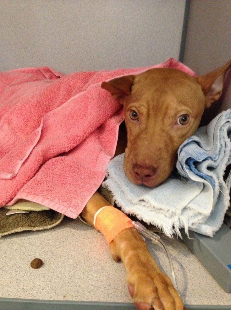 Archer meets Hailes Angels Pet Rescue! Animal rescue
