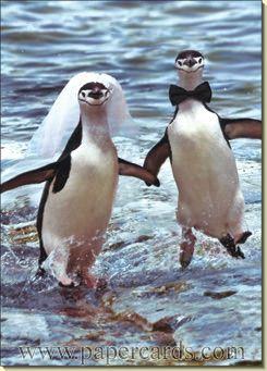 Two Penguins Running Wedding