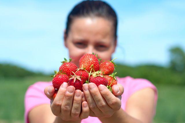 Menus travaux pour grands enfants Cueillir des fraises