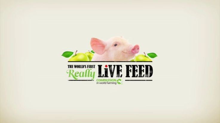 Compassion in world farming - Interactive digital outdoor - Good idea 2 help the poor people, too!