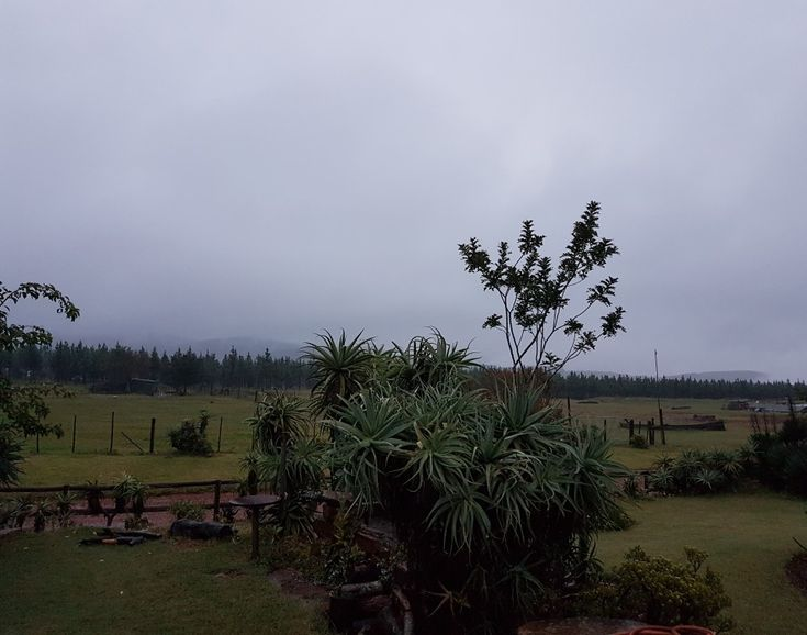 Even when it is raining and misty, it is still beautiful, peaceful and perfect at Kaapsehoop Horse Trails in Mpumalanga...#naturalbeauty #mountains #horses #backpackers #stopover #affordable #friendly #selfcatering #restaurant #deliciousmeals #outrides #wildhorses #forests #internationalvolunteerprogram #wildlife #southafrica #photosafari #tourism #extremefrontiers #adventure #holiday #vacation #safari #tourist #travel