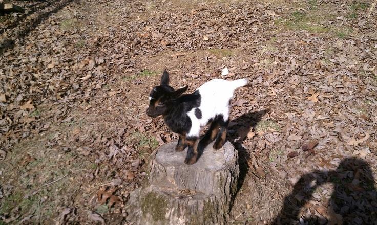 My Sophie: Sophie, Farms