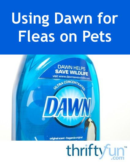 Many pet owners use or consider using Dawn dishsoap as an inexpensive shampoo for fleas. This is a guide about using Dawn dish soap for fleas.