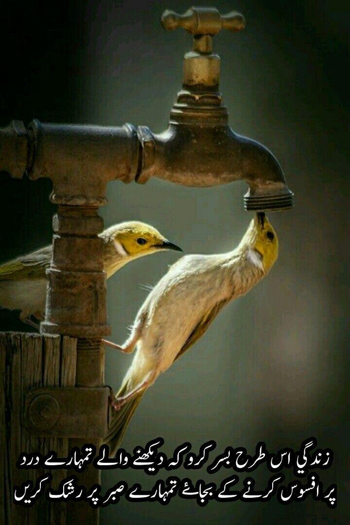 Kash Insha Allah S Pathan Birds Beautiful Birds Animals