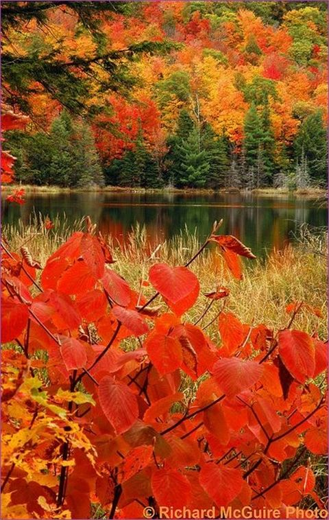 Lac Fortune, Gatineau Park, Quebec, Canada | Top 20 Beautiful Nature & Places In Canada.