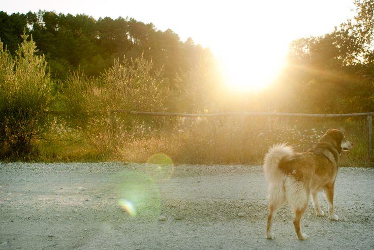 http://easyprint.com/it/blog/come-fotografare-gli-animali-domestici/