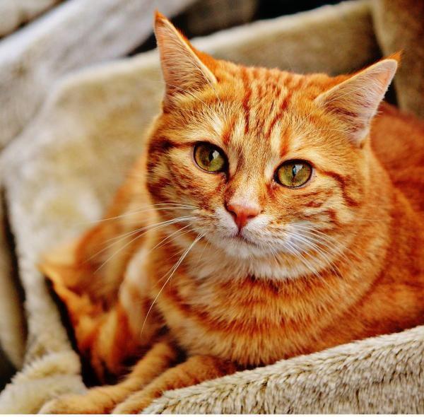 Raiva em gatos - Sintomas e Prevenção. De certeza que já ouviu falar alguma vez…