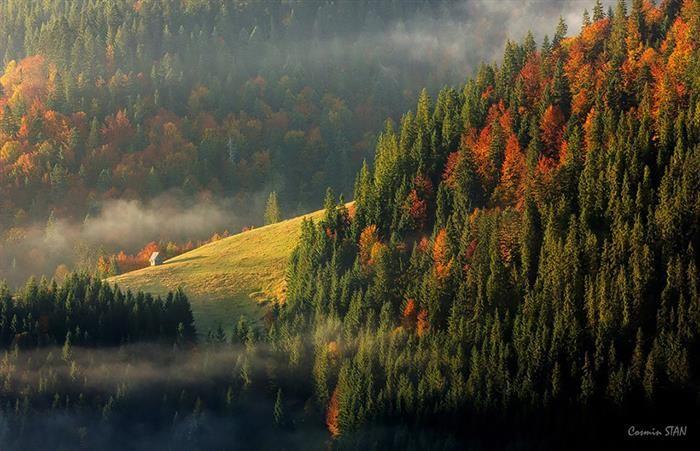Thin Fog Traveling Through The Apuseni Mountains