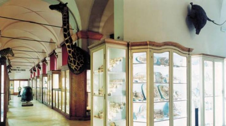 Musei Civici.