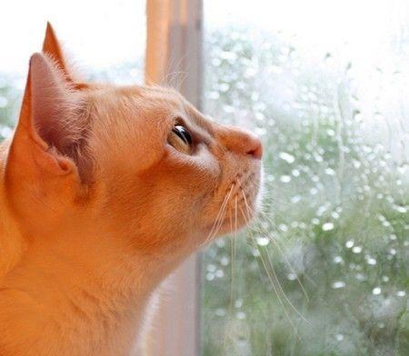 Rain rain go away, come again another day.