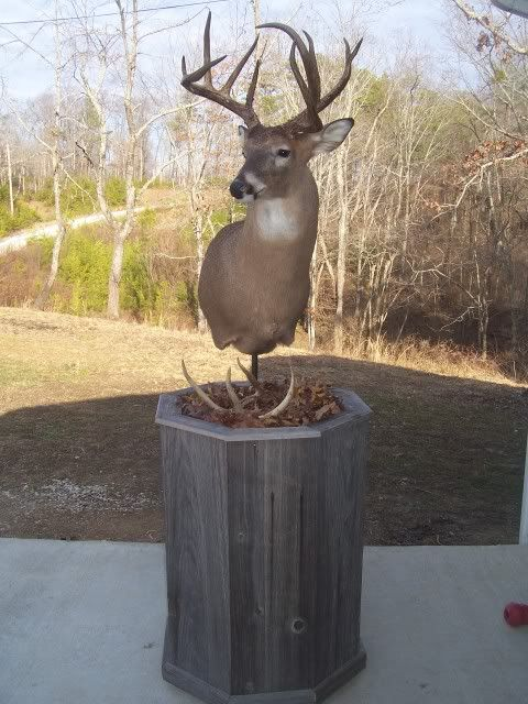 1000 Images About Deer Pedestal And Wall Mounts On