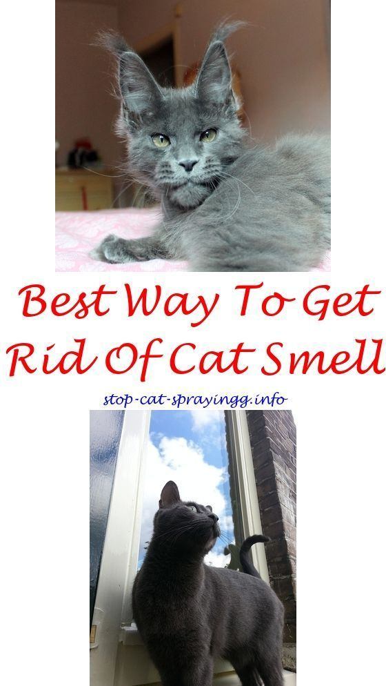 Cat Care Tips Male Cat Spraying Cat Pee Smell Cats
