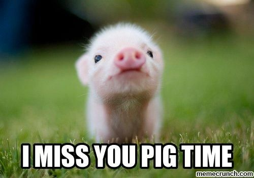 i miss you pig time