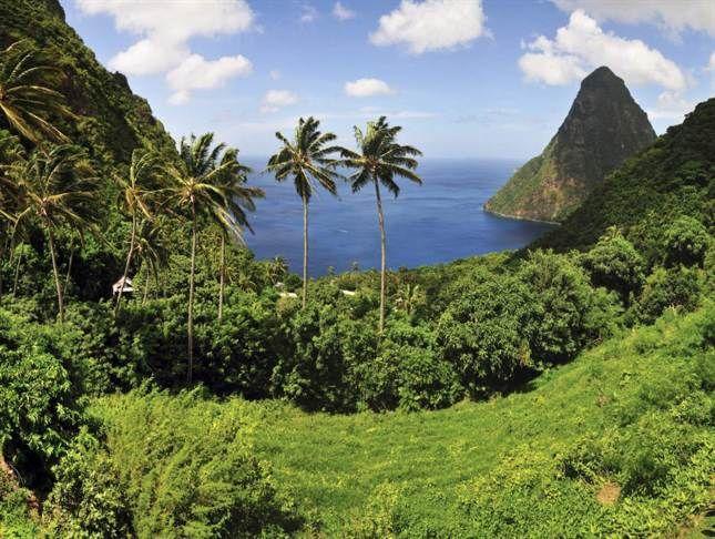 Gröna regnskogar på Saint Lucia Foto: Raul Rosa