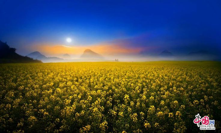 Canola Fields Quotes: 1000+ Ideas About Canola Flower On Pinterest