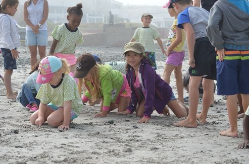 Sunningdale Prep Badgers and Otters went to Small Bay for a beach outing.