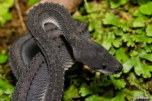 Best 25+ Snake reptile ideas on Pinterest | Beautiful ... | 497 x 329 jpeg 83kB