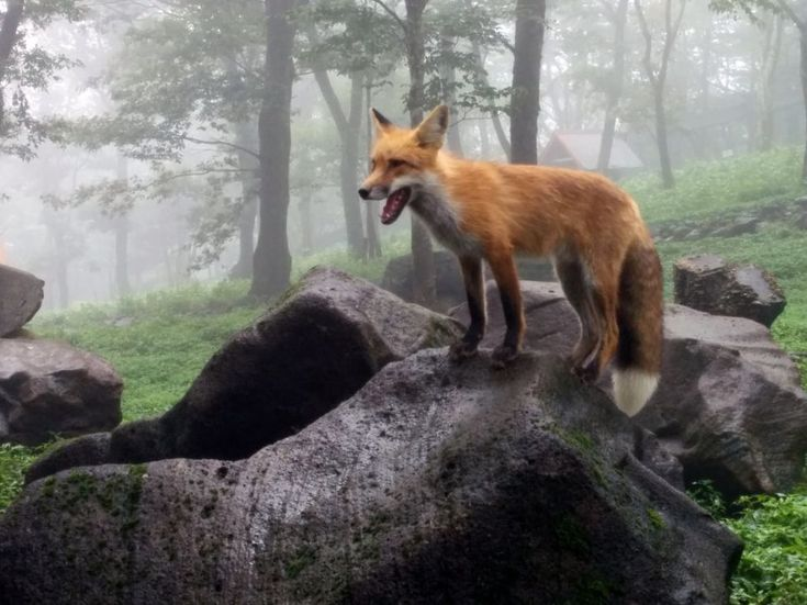 zao kitsune mura quotthe fox villagequot near the town of